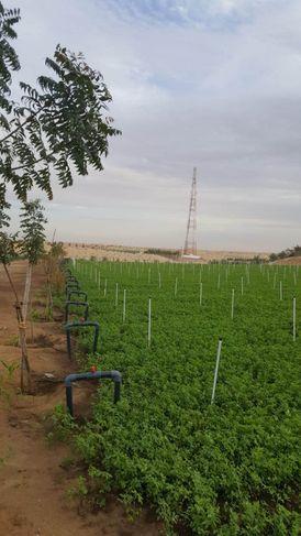 For rent farm in Sharjah Qatta