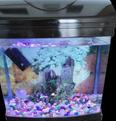 For sale Aquarium 1