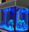 For sale Aquarium- fish tank