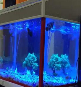For sale Aquarium- fish tank