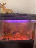 For sale Aquarium in mint condition 1