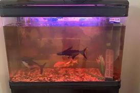 For sale Aquarium in mint condition