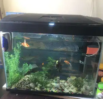 For sale Aquarium with fish