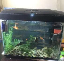 For sale Aquarium with fish