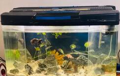 For sale Big fish tank