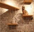 For sale Cat House Pets Design Ideas 1