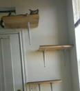 For sale Cat House Pets Design Ideas 2