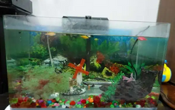 For sale Fish Tank with small Fishes