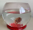 For sale Fish with Glass Bowl 2
