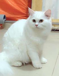 For sale katty friendly so sweet