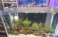 For sale planted aquarium