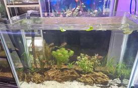 For sale planted aquarium
