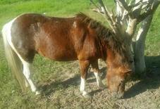 Horse bony with Female baby