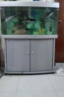Huge Aquarium Tank with fish FOR SALE