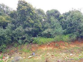 Land for Sale in Baabdat-Chalimar