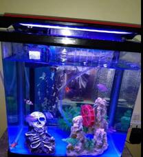 Litter capacity, Fish tank.