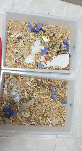 Mealworms & super mealworms
