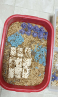 Mealworms & super mealworms 2