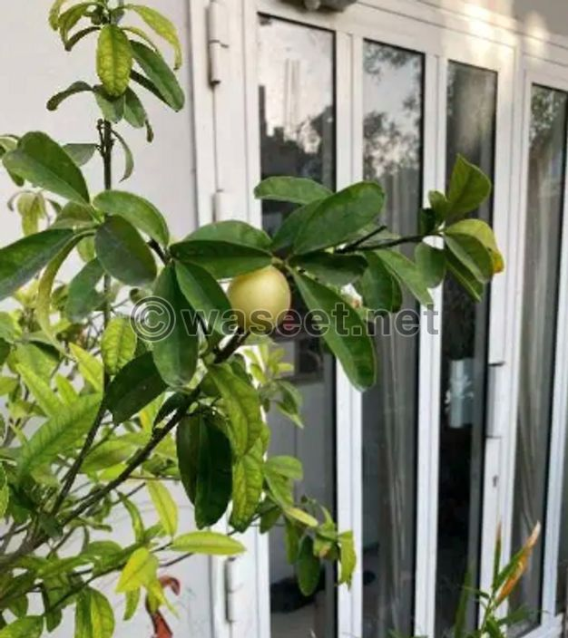 Natural Plants Outdoor