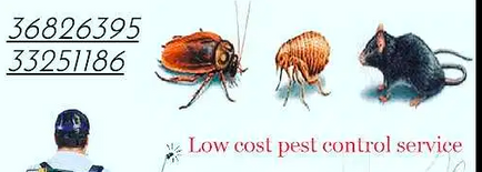 Pest control services All Bahrain available