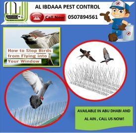 THE BEST BIRD CONTROL SERVICES IN ABU DHABI
