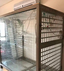 Two Parrots with big cage for sale