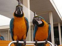 birds parrots for sale