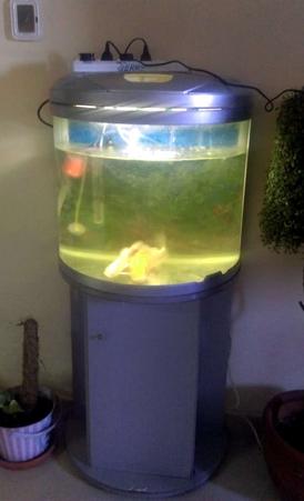 fish aquarium with Filter for sale