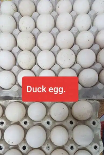 garden egg and Duck egg for sale
