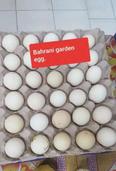 garden egg and Duck egg for sale 1
