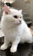katty friendly so sweet 1