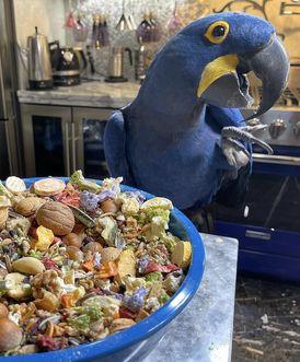 parrots birds for sale