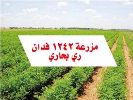 1242 acres farm in cairo alex desert road