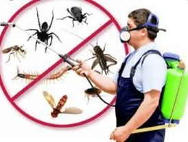 شركة مكافحة حشرات و تنظيف وتعقيم 13