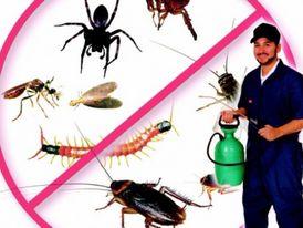 البرج الذهبي لأفضل خدمات مكافحة وإبادة جميع انواع الحشرات 9