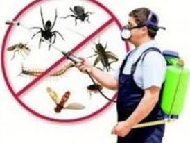 Secretariat for best pest control and pest control services