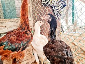 Various birds for sale 1