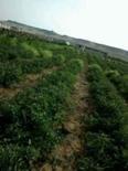 ارض زراعيه للبيع 1
