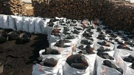 Charcoal For Export Elawsat Company Charcoal Production1