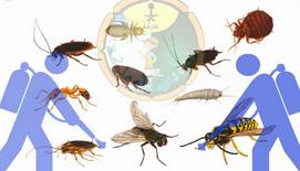 Anti Bugs0