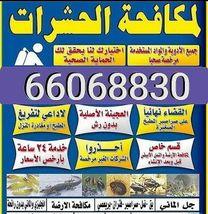 محمد لخدمة مكافحة الحشرات والقوارض0