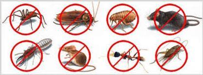 مكافحه الحشرات والقوارض الاتحاد المستقبل0