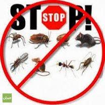 مكافحه الحشرات والقوارض الاتحاد المستقبل2