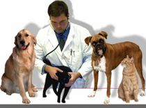 طبيب بيطرى لعلاج الحيوانات الاليفة بالمنازل0