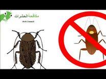 شركة روعة الابداع - مكافحة الحشرات0