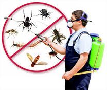 شركة الابداع الخليجي-مكافحة الحشرات0